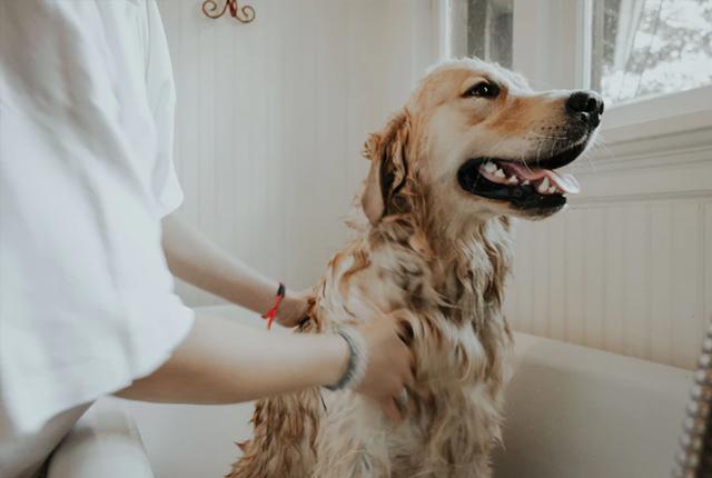 Jak wykąpać psa