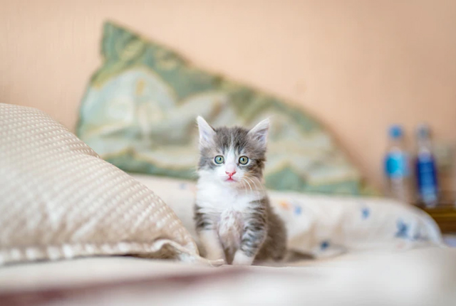 kot w nowym domu