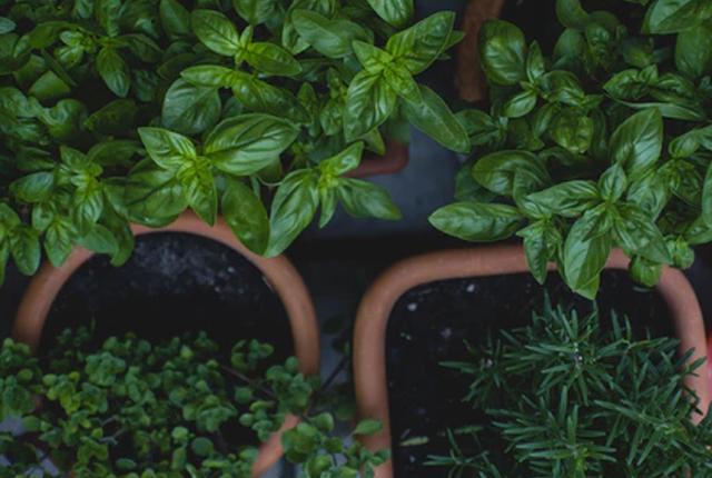 domowy ogródek