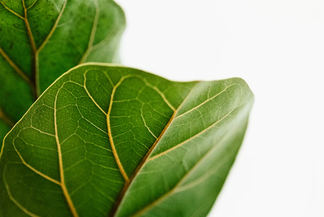 proste rośliny