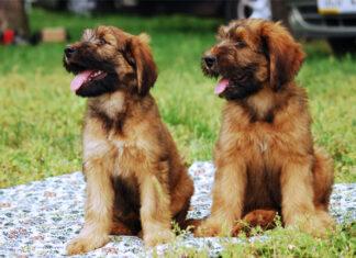 Komendy, które powinien znać twój pies