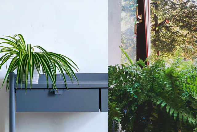rośliny pochłaniające wilgoć