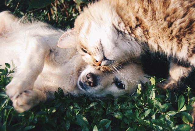 jak usunąć zapach moczu