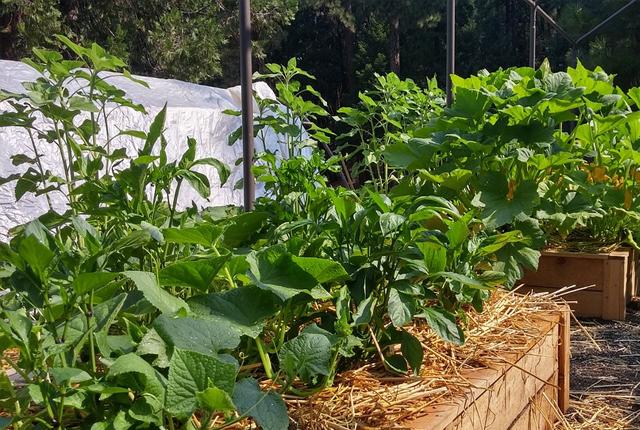 wysiewanie nasion