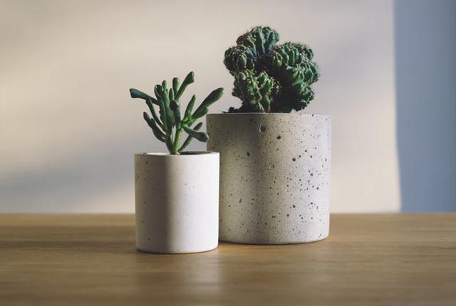 podlewanie roślin