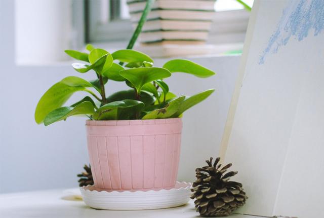 rośliny w ciemnym mieszkaniu