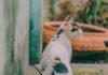 drapak dla kota diy
