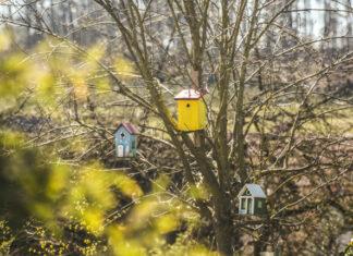 karmnik dla ptaków diy