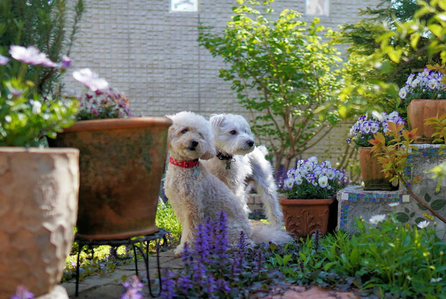 Pies a ładny ogród